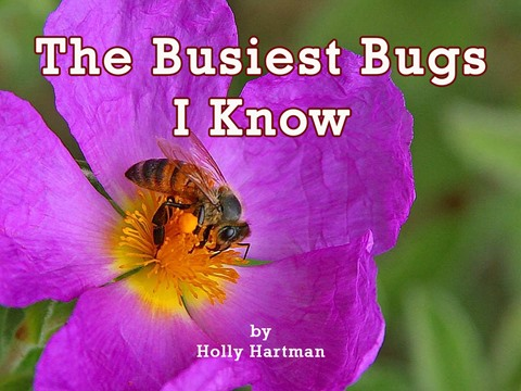 The Busiest Bugs I Know