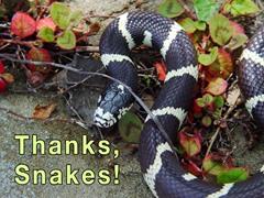 Thanks, Snakes!