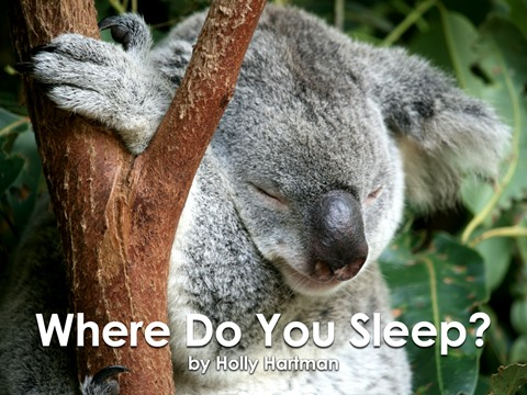 Where Do You Sleep?