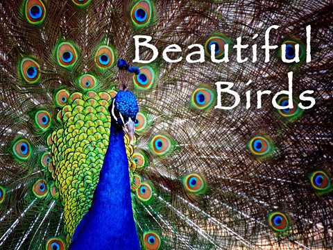 Beautiful Birds